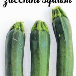 a beginner's guide to zucchini squash